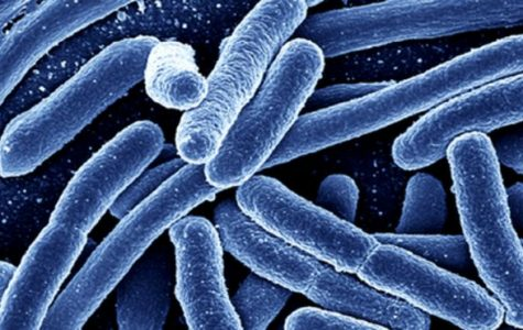E. Coli outbreak affects several eastern states, Ohio among them