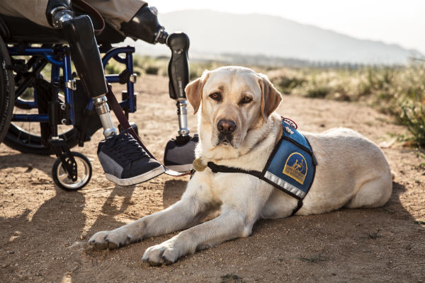 What you may not know about service dogs