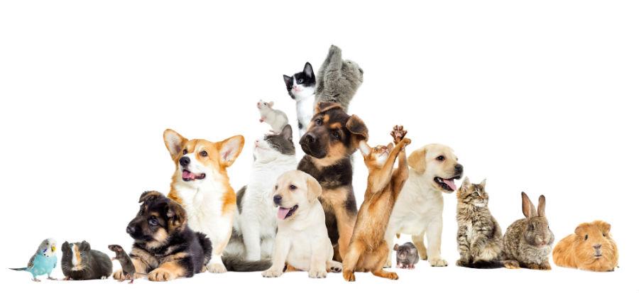 Careers+in+the+veterinary+field